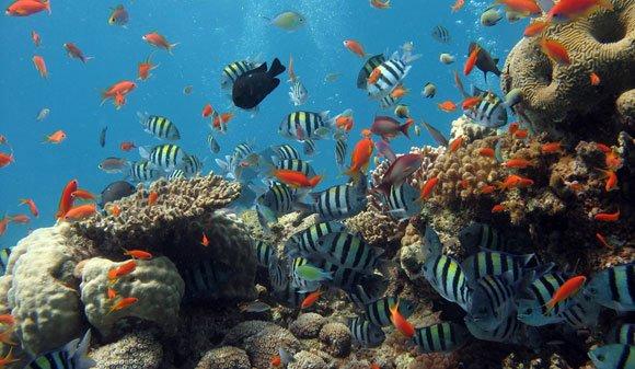 Tropical Fish Pets