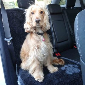 car seat carpet