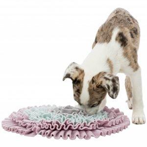 sniffing carpet