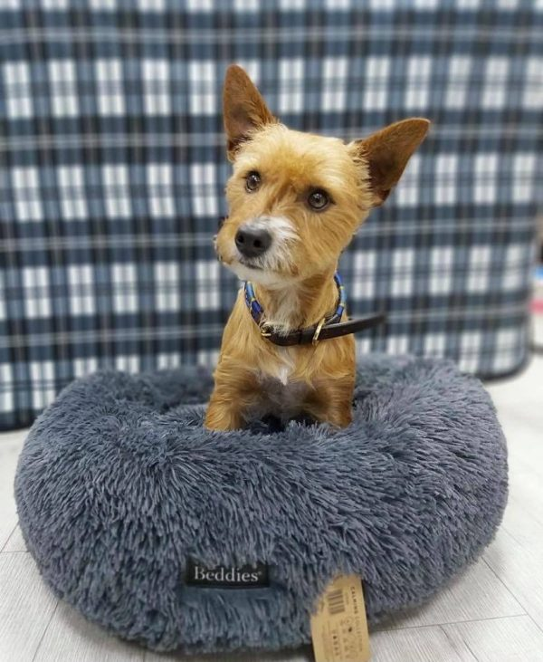 calming bed for pets
