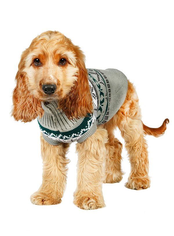 grey jumper for dogs