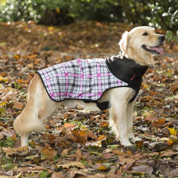 self heating dog coat