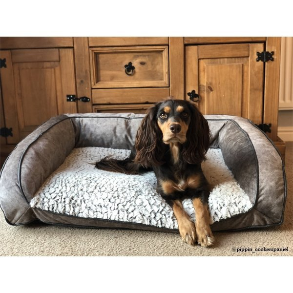 couch for dogs
