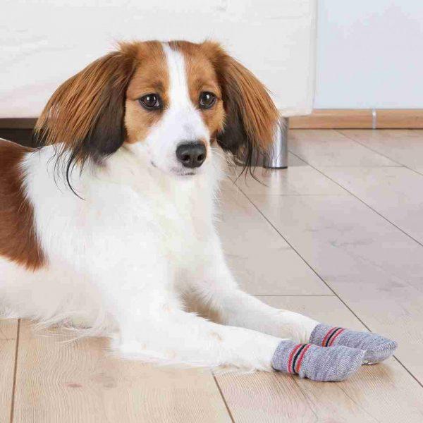 protective dog socks