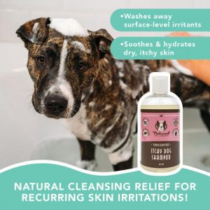 itchy dog shampoo