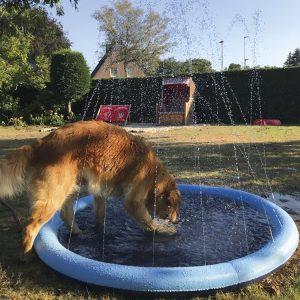 splash pad pool for dogs