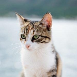 cat-portrait-ARPRA5A